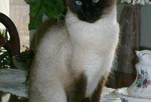 Mes chats: Dulcy et Cannelle