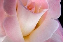 Flowers / by Joan Jerome