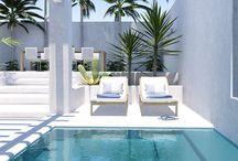 dracena e palmeira