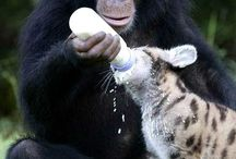 Animals / Funny and cute