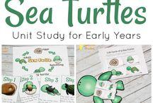 Life cycle turtle
