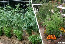 Φυτά και κήπος