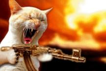 Gatos con armas / Imágenes de gatos con armas