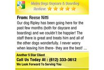 5 Star Reviews / Metro Dogs Daycare & Boarding Customer Reviews! Looking for reliable, safe dog daycare or boarding in Minneapolis? See what these amazing Metro Dogs' customers say about how we care for their dogs! - http://MetroDogsMN.com ~ (612) 333-3612 ~ Downtown Minneapolis doggy daycare and boarding dog kennel. Also professional puppy training, dog grooming, and webcams! / by Metro Dogs Daycare & Boarding MN