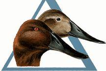 Conservation Organizations / Conservation Organizations