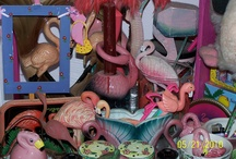 Flamingos / They are of my flock