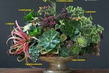 Plant Recipe Book Press / Thank you to all the sites who have listed, talked about, tried recipes, or recommended The Plant Recipe Book! We're so very grateful.