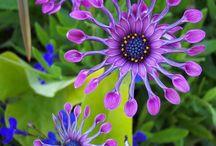 flowers / by Kathleen Barton