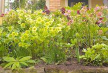 Garden: Front yard / by Ann Leete