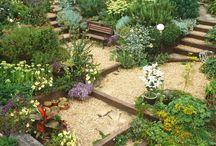 Bahçe ve ev