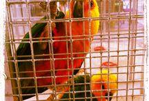 Exposição de Pássaros Exóticos / Não perca esta exposição até ao dia 14 de Julho!