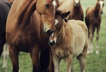 Love of mother horse with their babies