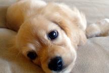Pets I would like