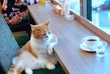 Photo de gatto with an attitud