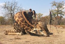African hunting / African hunting