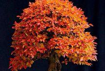 Amazing tree, flowers etc