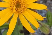 Botanical / Medicinal plants