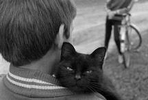Gatos / by Astrid Malacarne