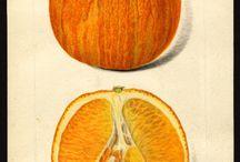 Antique & Scientific Illustration Botanical