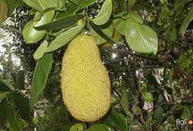 Bali Fruits & Vegetables / #Bali #Fruits and #Vegetables