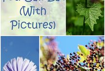Plant foods to pick right from nature :-D