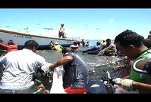 Рыбалка неводом. | Большой улов- Веселая рыбалка.