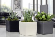 Magnetized  Cube Planters / Magnetized Modern Cube Planter with Live Plant