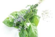 herbs / by Anastazia la Luminaire