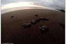 Turtle adventure.