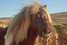 Still makes me laugh / Pony