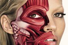 Anatomic bodypainting