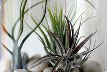 Découverte plantes
