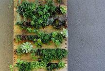 tuin-planten