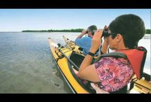 Ask An Insider / Have a question? Ask an Insider! Explore the hidden treasures of The Beaches of Fort Myers & Sanibel by finding the best spots to enjoy the outdoors and our wildlife. To help you have an authentic experience, our Insiders are ready to share their expertise on shelling, fishing, paddling, birding and weddings across our beautiful beaches. You can check out their comments and ask questions through Twitter, use #SWFLInsider, Facebook or through email. http://www.fortmyers-sanibel.com/ask-an-insider / by The Beaches of Fort Myers & Sanibel Florida