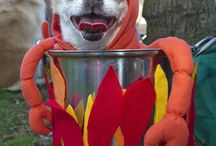 Pet Costumes / all about pets in costumes, it doesn't just have to be for Hallowe'en.
