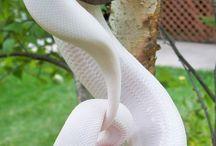 animales albinos preciosos