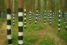 Trees / by Lydia Billman