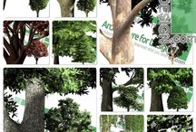 Hi-resolution cut-out trees: PNG format / For use with Adobe Photoshop or other products, this detailed, high-resolution collection of front-view tree cut-outs makes it easy to produce high-quality drawings, perspective views and photos