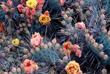 Cactus crush / by Becky Tilson