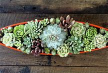 Succulent + Cacti