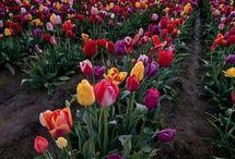 Flowers ~ ~ ~
