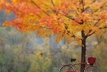 Fietsen herfst