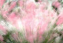 Grass Травы