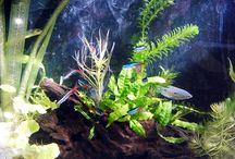 Akvaristika / rybičky, rostlinky, vše kolem akvaristiky