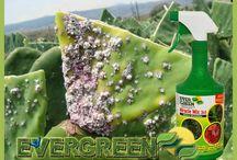 Insecticidas y fungicidas / Ideales para proteger tu jardín
