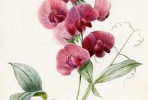 [THEME] Flore