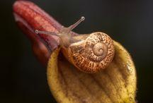 σαληγκαρι snail