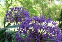 Perennial Garden & Landscaping / Landscaping A Nirvana