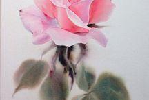 Розы la fe