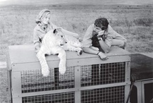 George & Joy Adamson - pioneers of animal conservation / Pioneers of animal conservation, George & Joy Adamson have always been inspirational to me. Elsa the lioness and the movie Born Free is significant to me. I experienced everything Adamson related when I traveled to Kenya in 2013 and went on safari.